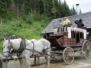 Barkerville Horses Work!