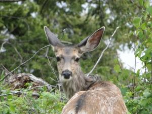 Oh Deer Me.