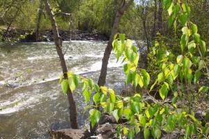 Ok River Trail Oliver So Okanagan Spring Day Apr 29 02 058