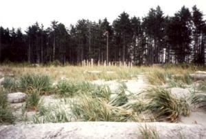 Woodhenge 002